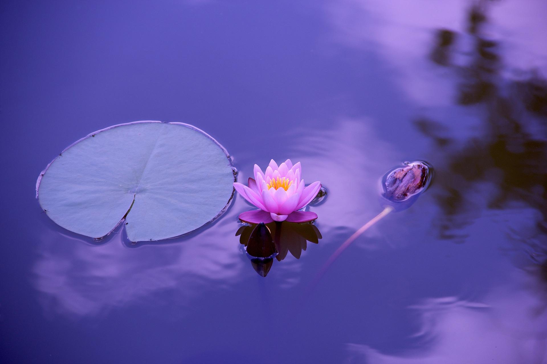 Релаксация и медитация